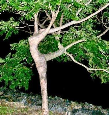 Arboreal Ballet